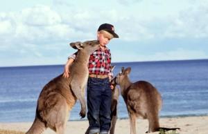 boy 2 kangaroos