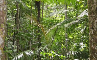 Rainforest Dreaming in Australia