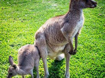 WONDERFUL WILDLIFE YOU CAN SEE IN AUSTRALIA